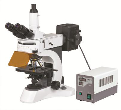 BS-7000A Upright Fluorescent Biological Microscope